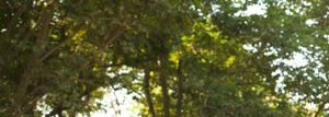 Park View at Laurel homepagegallery 3