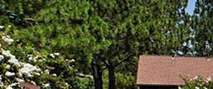 Ridgeland banner 1