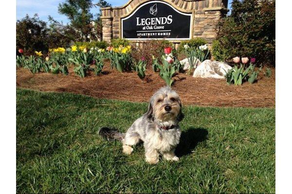 Legends at Oak Grove Apartment Homes Knoxville, TN 37918 Pooch Prints Program