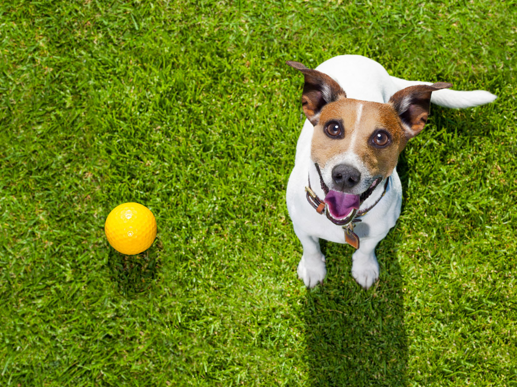 Pet Friendly Apartments in Wilmington NC