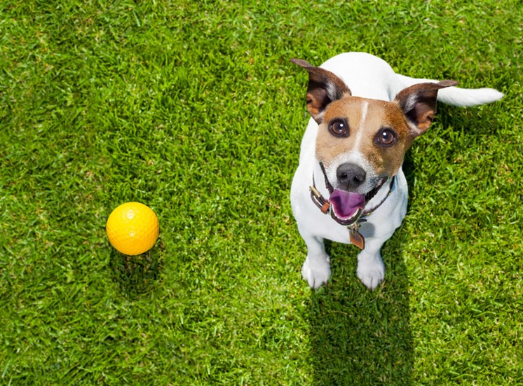 Dog and ball at Pet Friendly Apartments in Wilmington NC