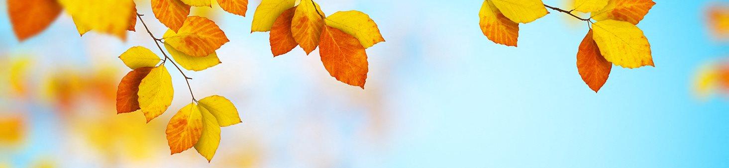 Autumn-Leaves-Banner