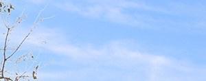 Lawnton banner 1
