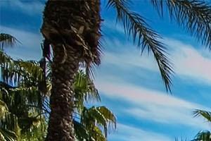 Avondale, AZ Apartments with Refreshing Swimming Pool