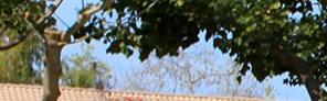 Vista banner 1