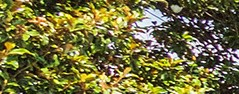 Charlotte banner 1