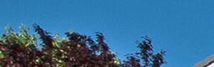 Rohnert Park banner 1