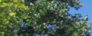 Louisville banner 1