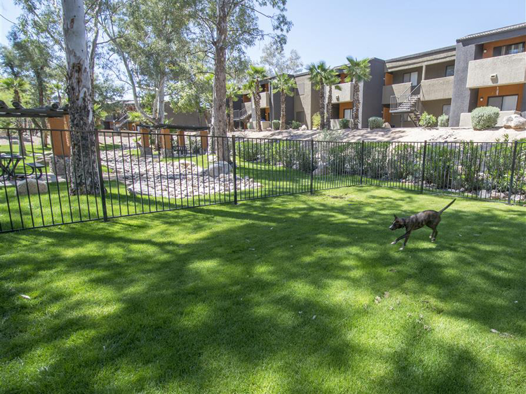 Lush Bark Park for Fido and Friends at Palm Canyon Apartment Homes