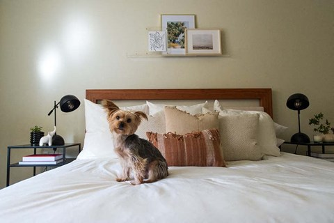 Cute dog on bed 1801 L Apartments