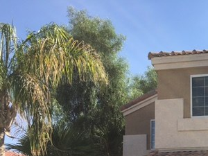 11993 W Almeria Rd 4 Beds House for Rent Photo Gallery 1