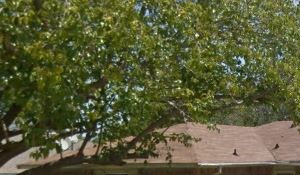 508 Sesame Drive 4 Beds House for Rent Photo Gallery 1