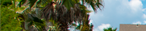 Tallahassee banner 1