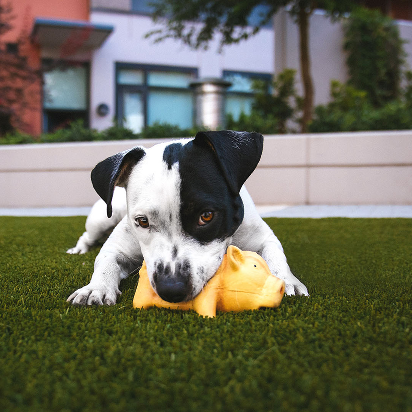 Pet friendly at Atwood Apartments in Citrus Heights, CA