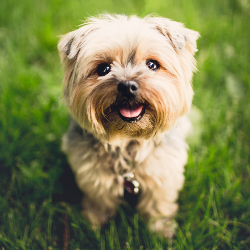 Pet friendly at Bella Vista Apartments in Elk Grove, CA