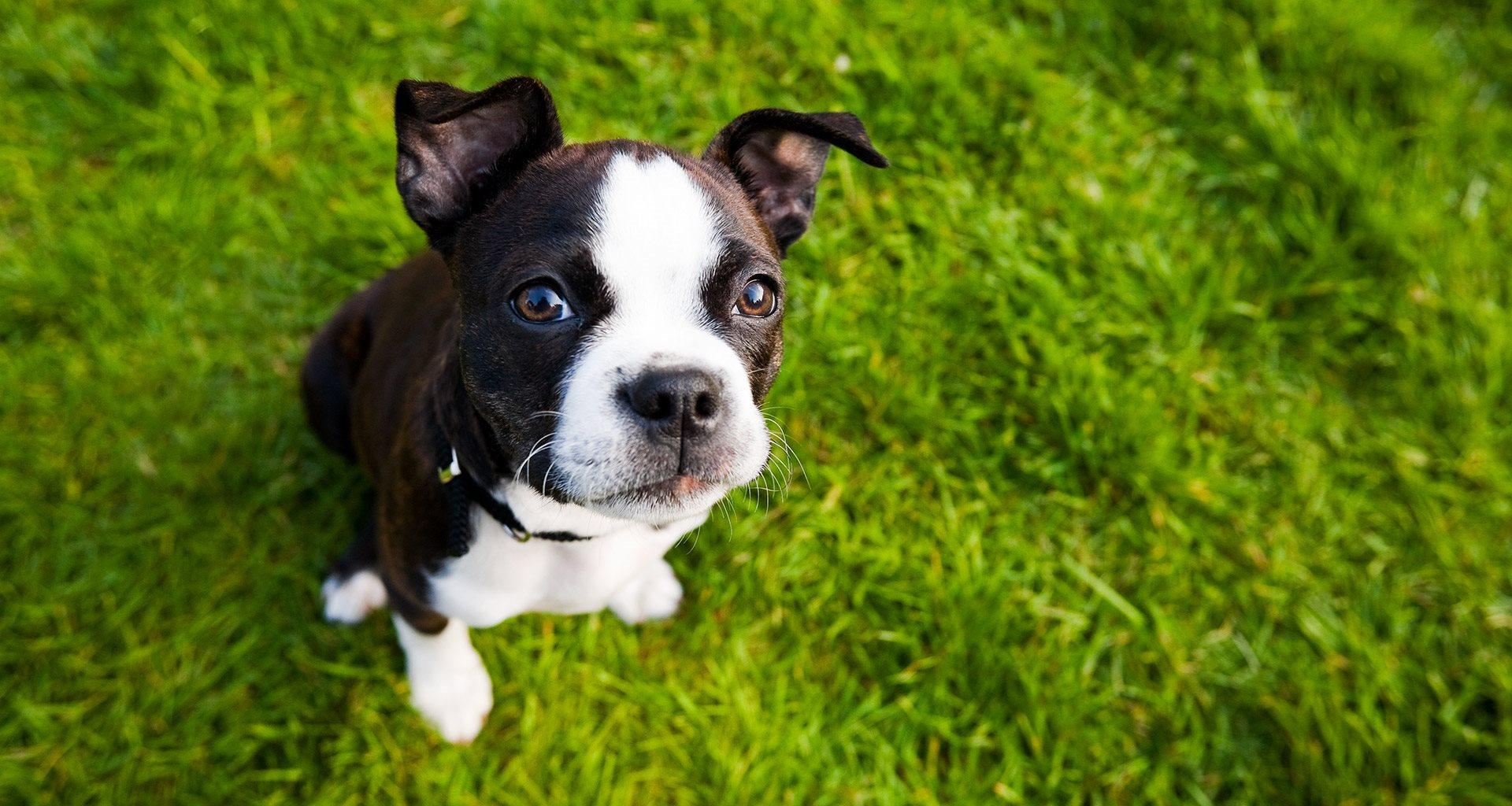 Dog Park available at Aqua Links, Sanford Florida