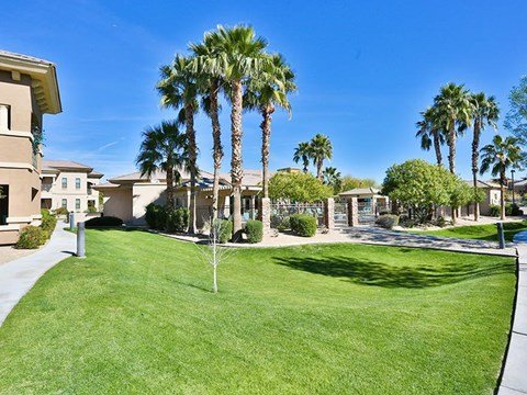 Lush lawn landscaping with palm trees