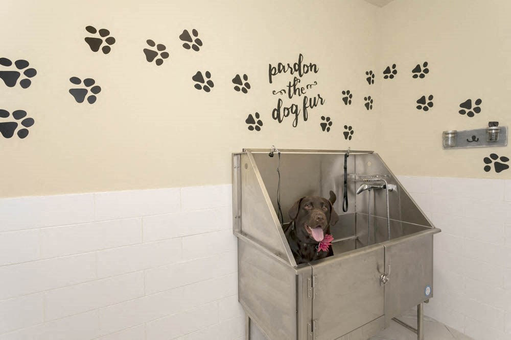 Luxury paw spa for the furry residents
