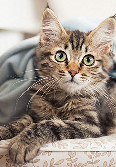Pets Welcome at Mirador at Doral by Windsor, Doral, FL