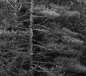 Saratoga Springs background 1