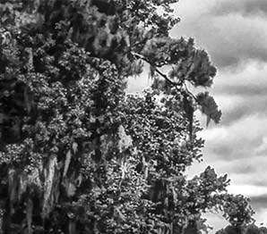 Augusta background 1