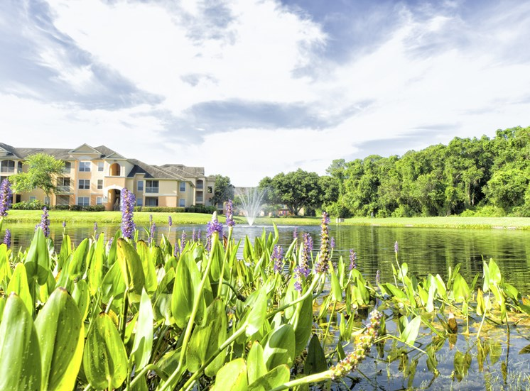 Beautiful lake View at Tuscany Bay Apartments, Florida, 33626