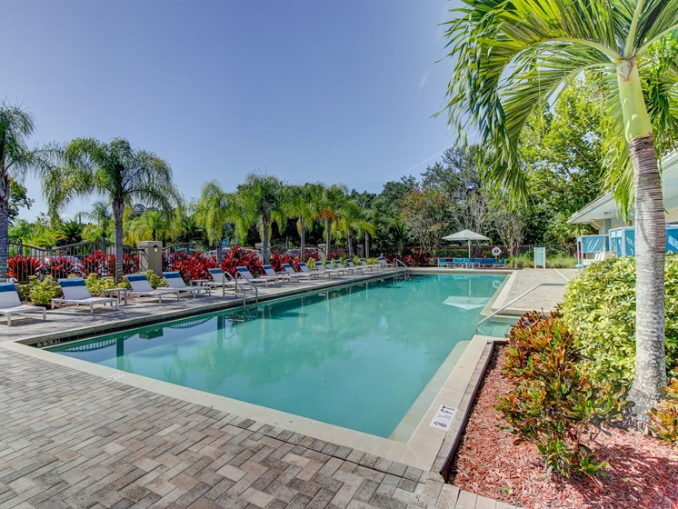 Outdoor Swimming Pool at The Preserve at Westchase, Tampa, 33626
