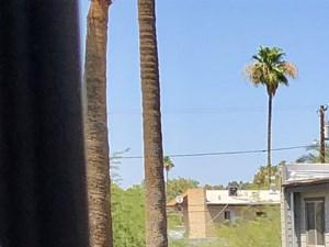 Phoenix photogallery 13