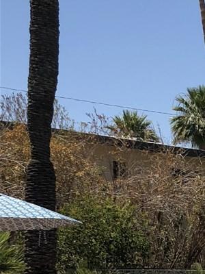 Phoenix photogallery 15
