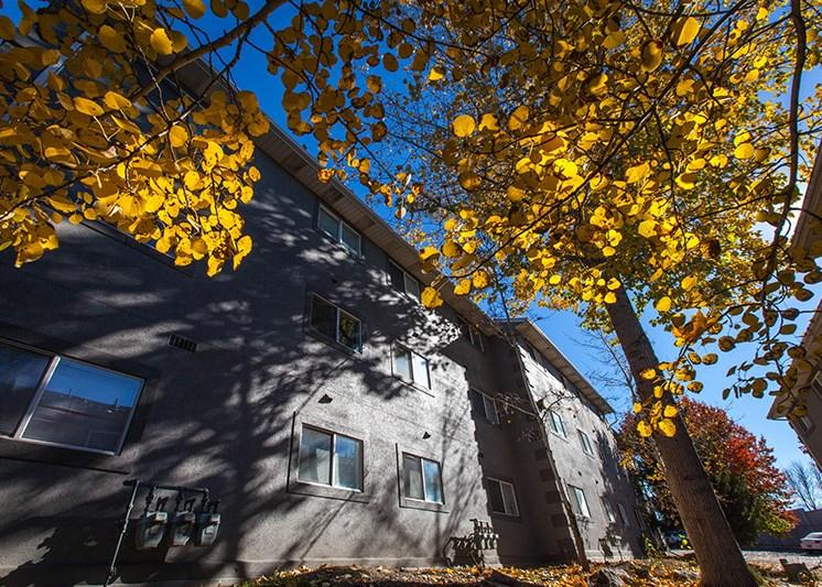 Mountain Run Fall Trees
