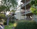 Arastradero West Community Thumbnail 1