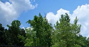 Auburn homepagegallery 3