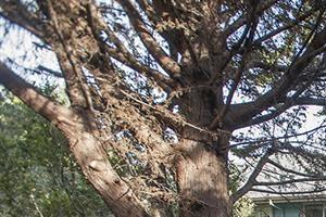 Grass Path at Pacific Vista, Monterey