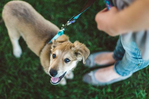 Leashed dog standing next to a person outside