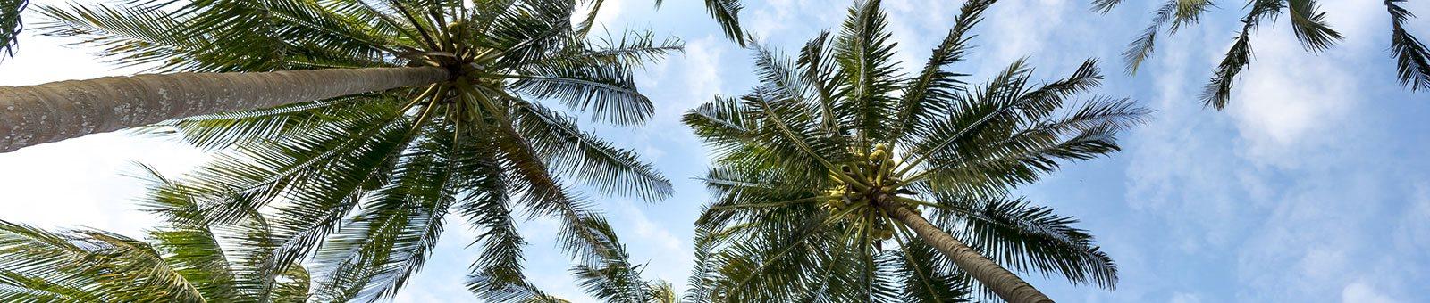 Palm trees_Cypress Oaks Apartments Leesburg, FL