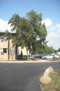 Elizabeth Court Apartments photogallery 4