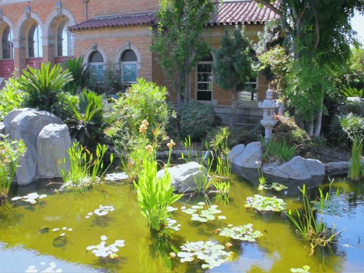 Tranquil Garden Ponds - Sakura Gardens