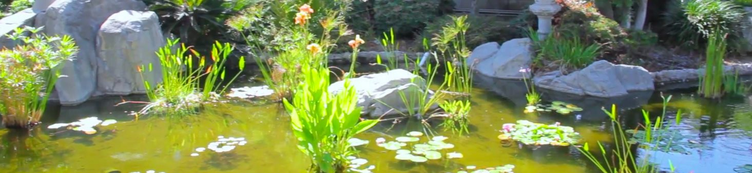 Top-notch live, local and Japanese entertainment at Sakura Gardens, California