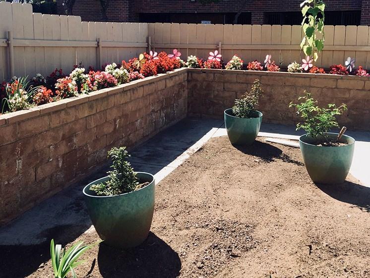 Lush Courtyards With Planter Boxes at Pacifica Senior LIving, Alta Vista Senior Living, Vista