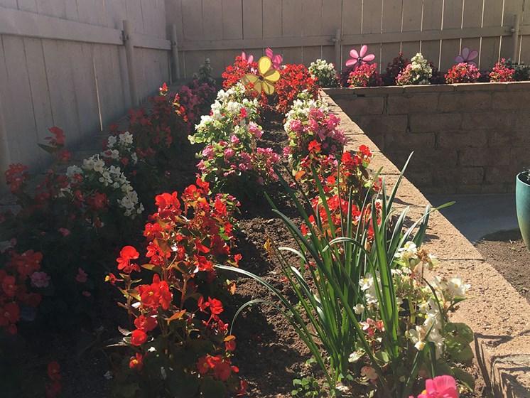 Beautiful Flowers at Pacifica Senior LIving, Alta Vista Senior Living, Vista, 92083