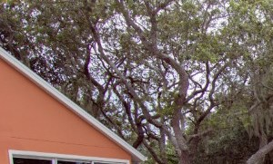 Palm Bay homepagegallery 1