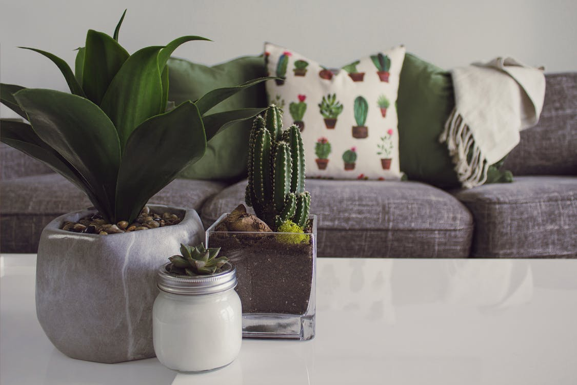 3 potted succulent plants on a coffee table