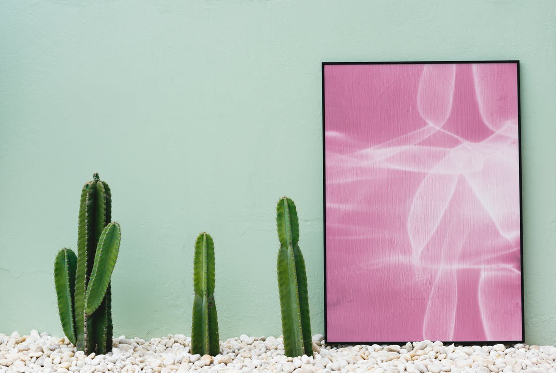 Cacti on a floor covered in white rocks, next to a framed painting, against a light green wall
