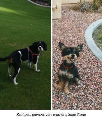 Sage Stone at Arrowhead Apartments | Pet-Friendly Apartments