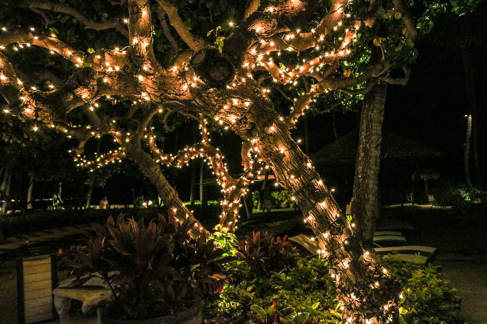 GARDEN LIGHTS & HOLIDAY NIGHTS AT ATLANTA BOTANICAL GARDENS - 2460 ...