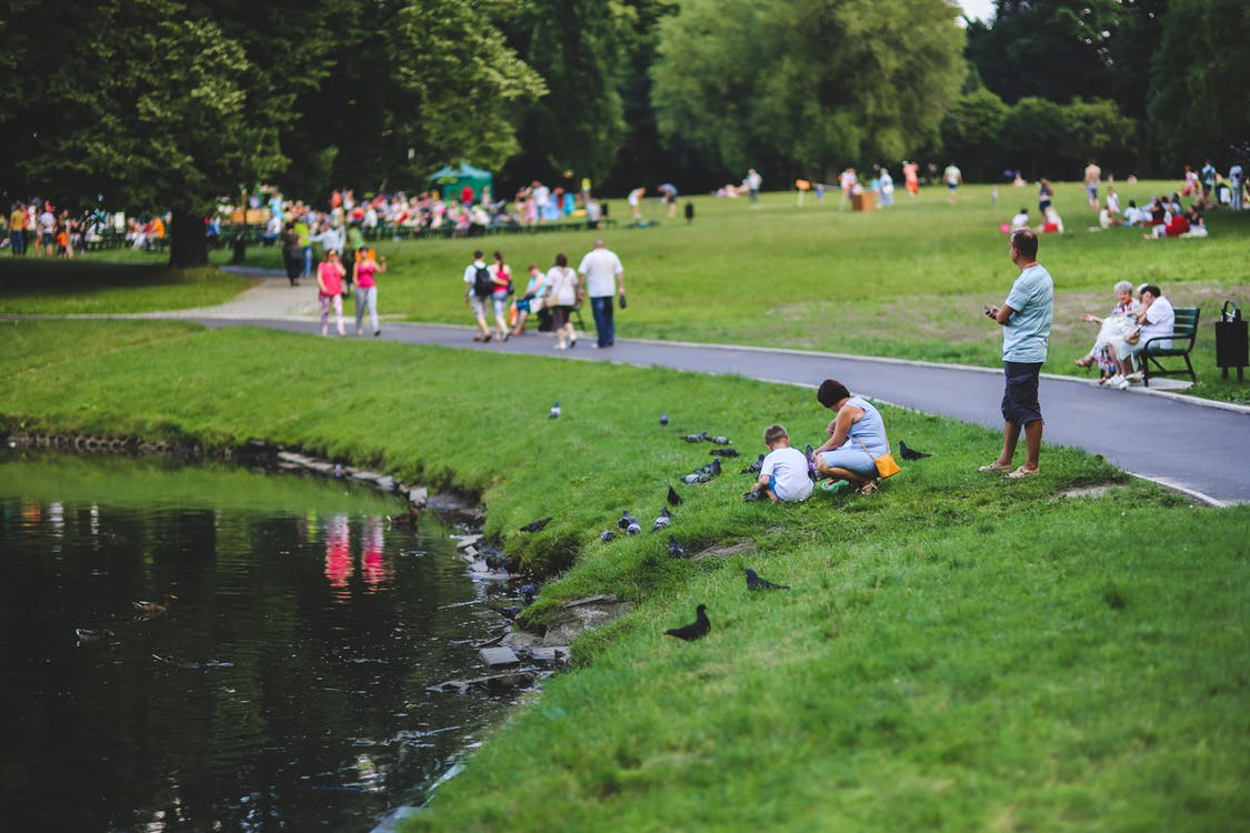 People feeding birds next to a pond at a park