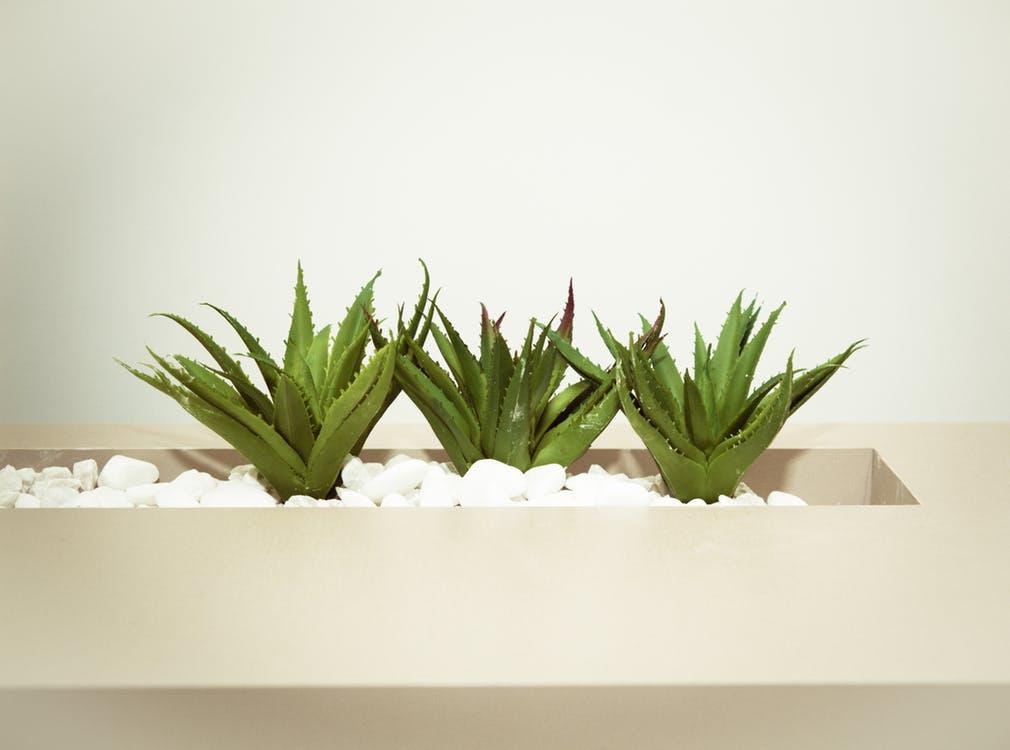 good plants for bathrooms