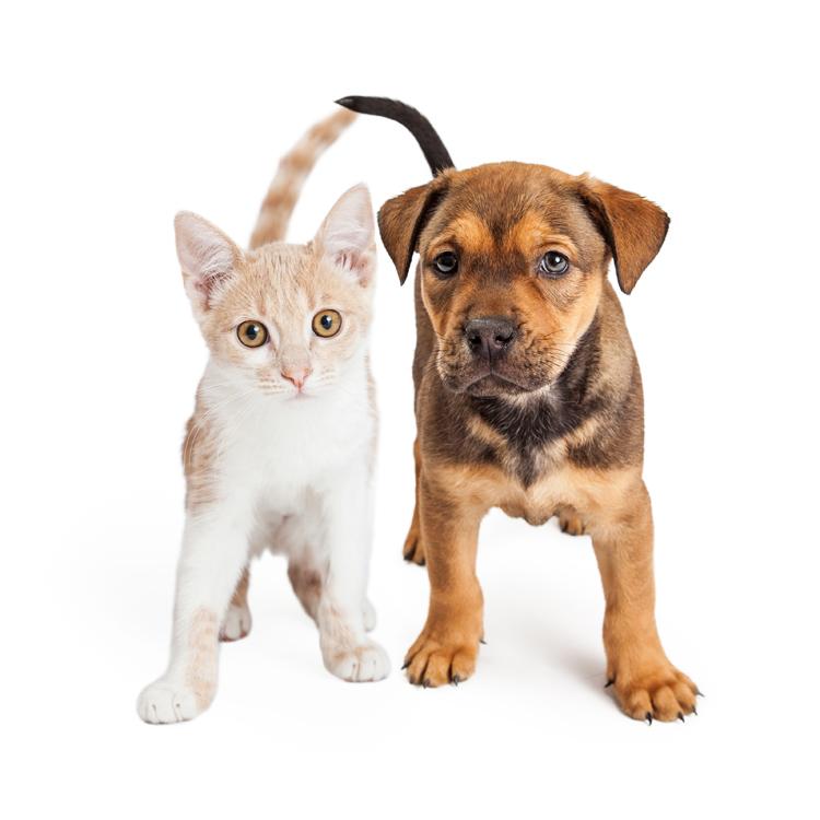 Pet Friendly!