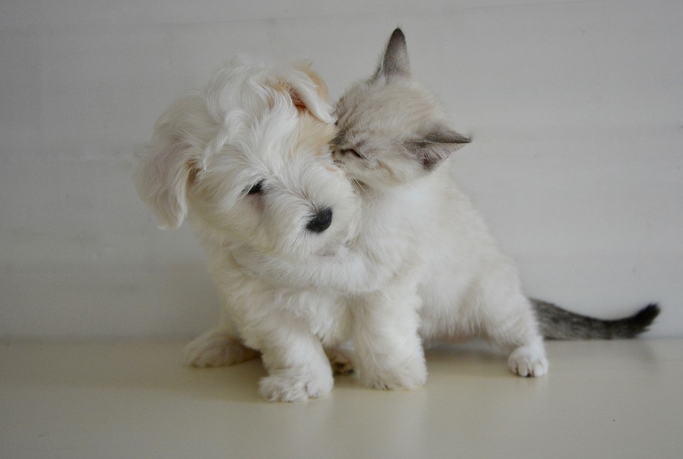 Small Dog and Cat