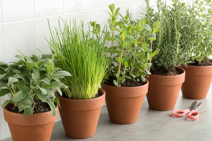 Indoor Plants & Herbs